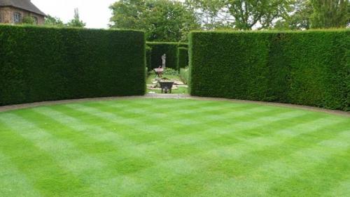 Harold  lawn garden