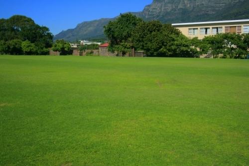 lawn grass starke garden