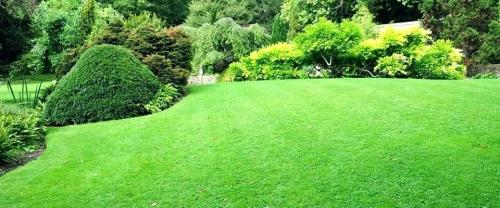 rays lawn garden